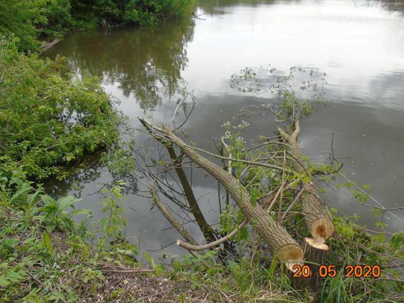 Навколо ставка вирізали дерева, у рибалок ламають вудки