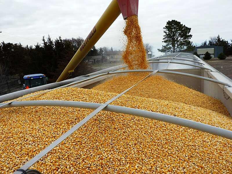 З країни вивозять зерно. Хліб може подорожчати