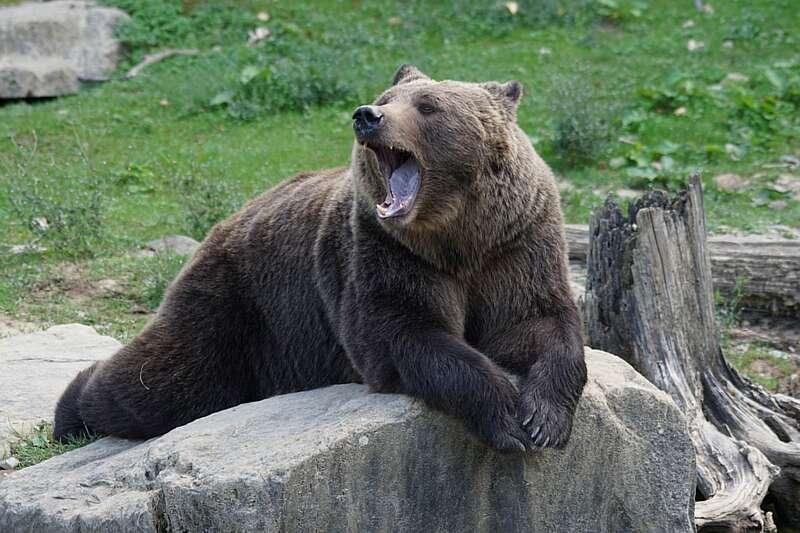 """Відкривається """"Подільський зоопарк"""""""