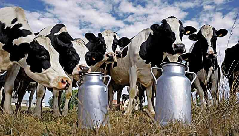 Скільки ще будете гнобити народ? Несправедливою ціною на молоко обурені селяни Вінниччини (лист)