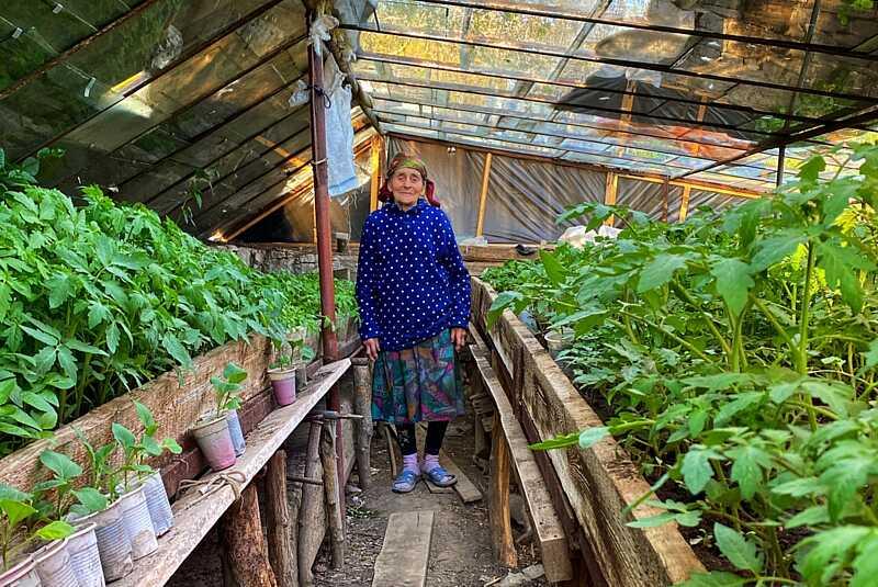 У свої 93 Ольга Харевська вирощує розсаду для односельців