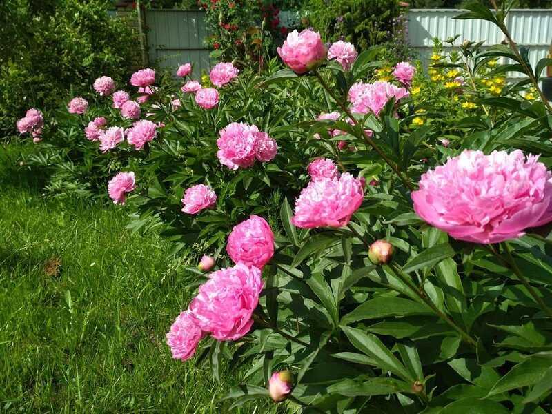 Увага, конкурс! Надсилайте фото вирощених власними руками квітів та клумб
