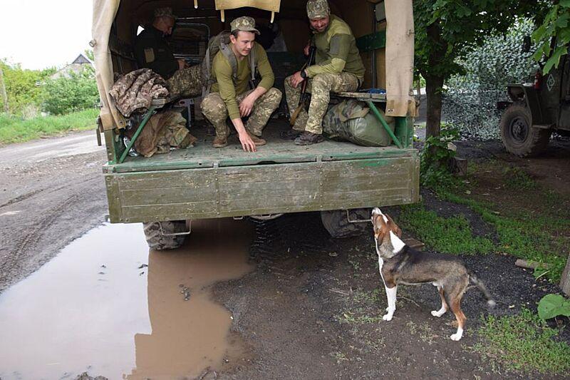 Щеняча вірність на передовій – волотерка Юлія Вотчер показала собачку в АТО, що людяніша за людей (відео)