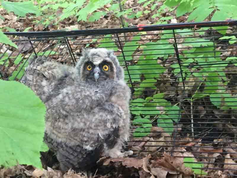 Розпочався «пташеняткопад». Не беріть із лісу пернатих малюків додому! – попереджають вінницькі лісівники