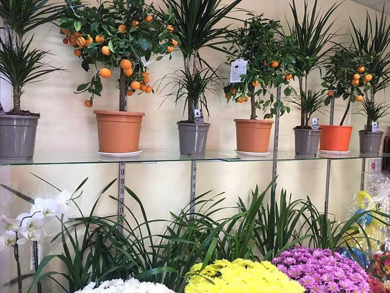 Під час карантину у Вінниці найкраще продавалися гвоздики. Чи змінилися ціни у вінницьких квіткових? Який асортимент зараз в ТОПі?