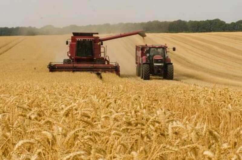 Аграрії п'яти районів Вінниччини розпочали жнива