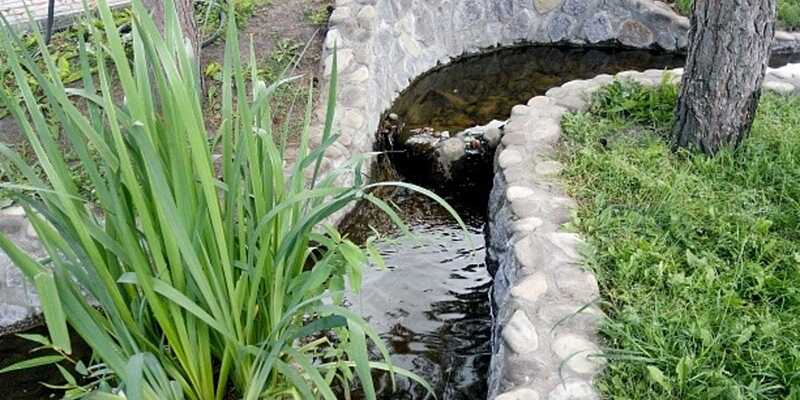 «Осока звичайна» – очисник Вінницького зоопарку