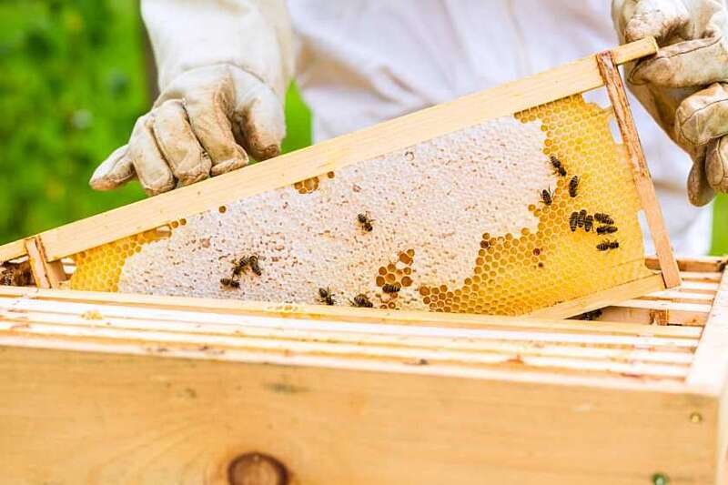 """Спеціальність """"Бджолярство"""" хочуть викорінити з професій Вінниччини"""