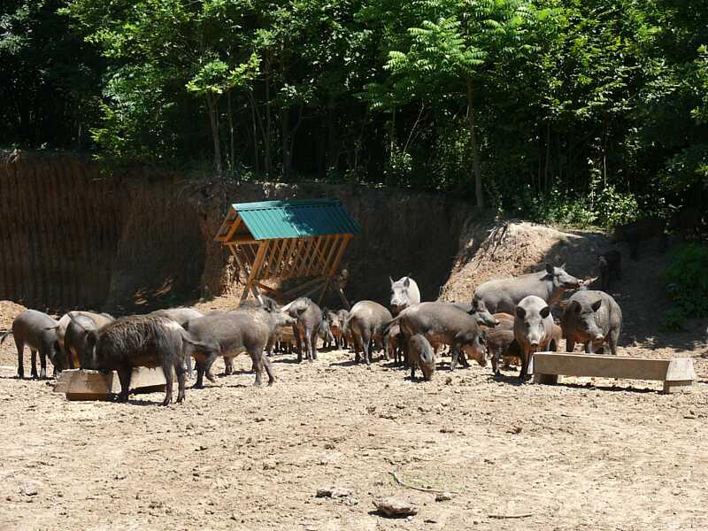 Дашівські лісівники – піонери вольєрного господарства на Вінниччині