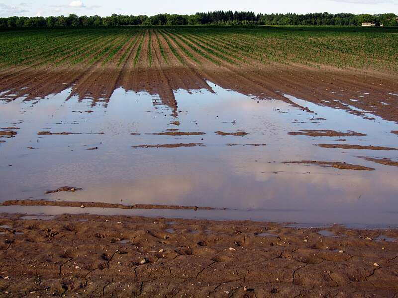 В Ямпільському районі злива затопила зернові