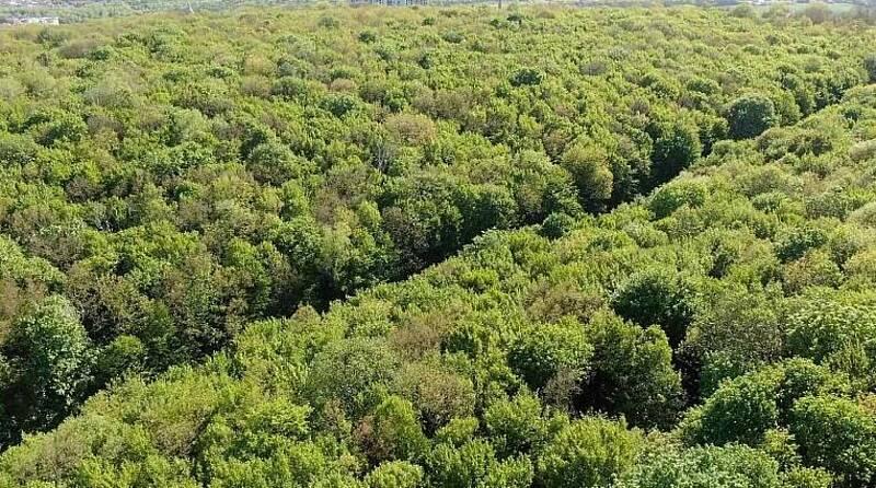 Вінницький ліс фотографуватимуть з висоти пташиного польоту