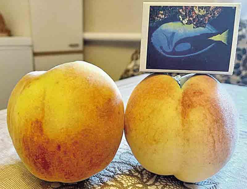 3-метрові томати і персиковий рай