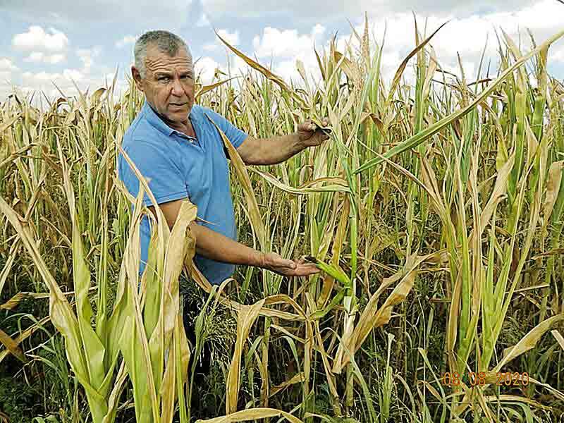 Посуха нищить урожай у фермерів на Вінниччині
