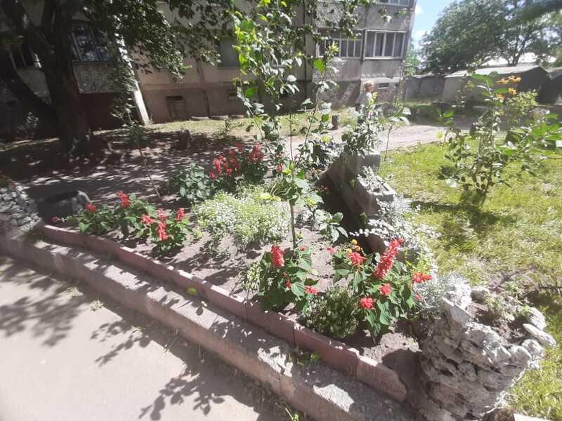 Зелений рай на Короленка у Вінниці (відео)