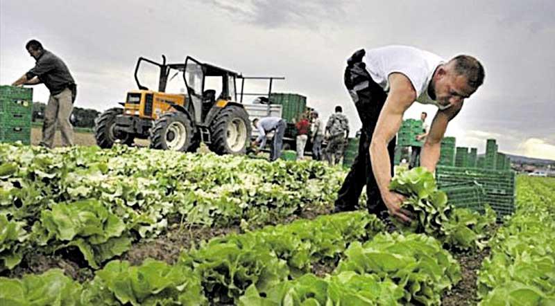 Чому селяни Медівки не їздять на заробітки – знає керівник місцевого сільгосппідприємства Петро Сплодитель