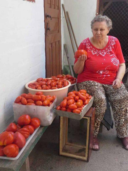 Вінниччина – «помідорний рай»