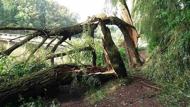 Не дай Бог ця верба впала би на людей! – директор «Вінницязеленбуду» прокоментував велике обрізання старих дерев у парку на Вишенці