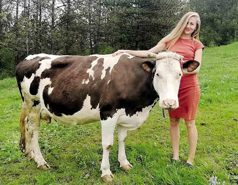 Унікальний притулок для корів створило подружжя з Дніпра у Буші