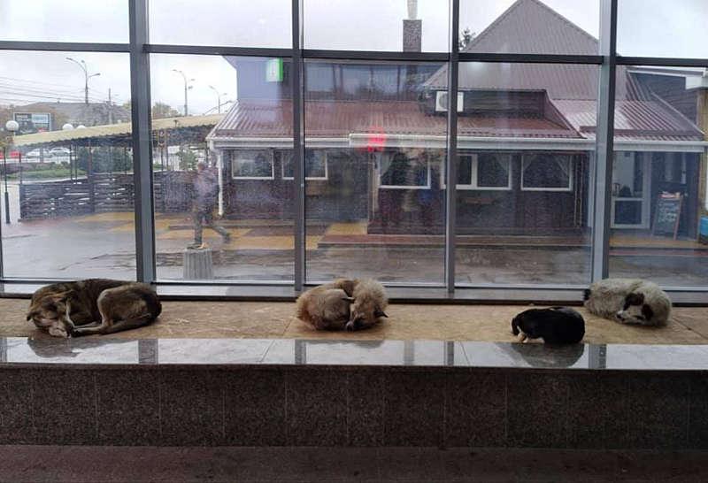 Понад 3000 перепостів отримав вчинок власника торгового центру, який прихистив безпритульних песиків