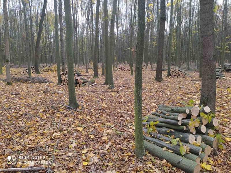У Дашівському лісомисливському господарстві незаконно зрубали понад 1 тисячу дерев 9 мільйонів — розмір заподіяної шкоди
