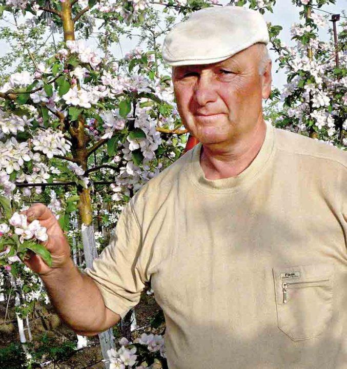 Урожай гранатів збирає щороку господар із Ямпільщини