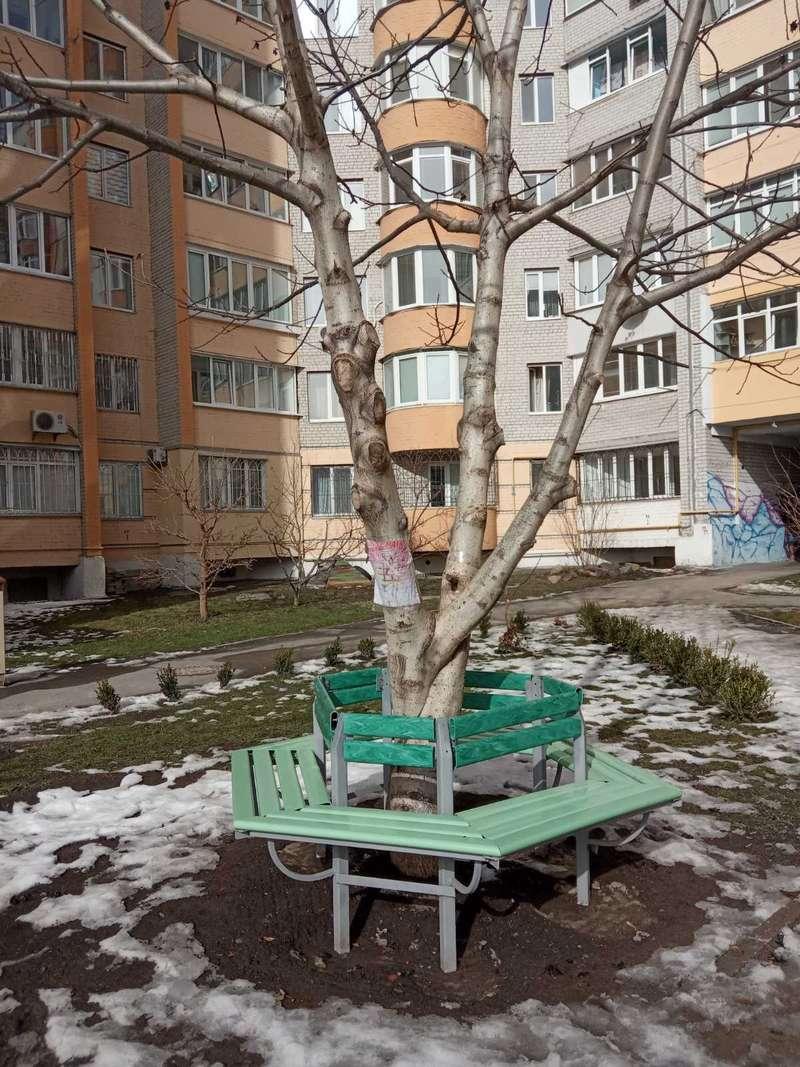 Вінничани нарікають, що діти падають із дерева на небезпечно встановлену лавку: відповідь посадовця
