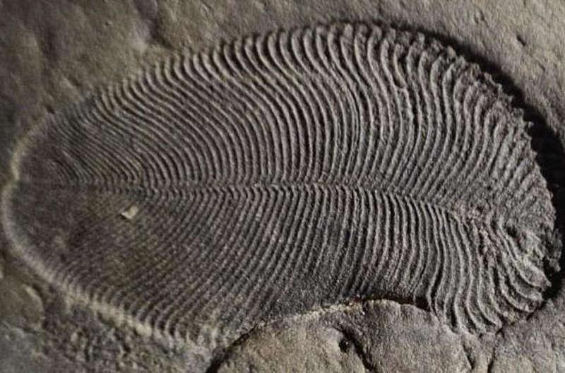 У долині Дністра на Ямпільщині знайдено вендобіонти. А ще там унікальний пісковик, який скуповує Європа