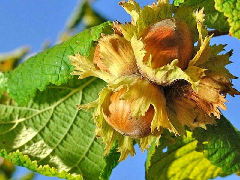 Вінничанка вирощує дерева з насіння: кипариси, хурму, гранат та багато інших