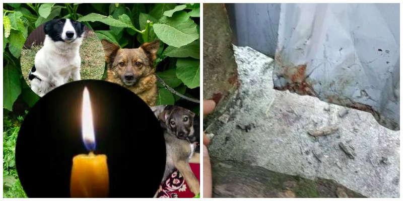 Жмеринка повстала через вбивство трьох собак! Власниця пропонує 10 тисяч винагороди за інформацію про вбивцю! Справу взяв на контроль Геращенко!