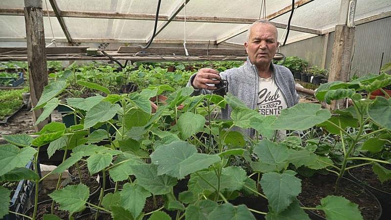 Дерево-фенікс, джерело кисню, вирощує садівник із Ворошилівки