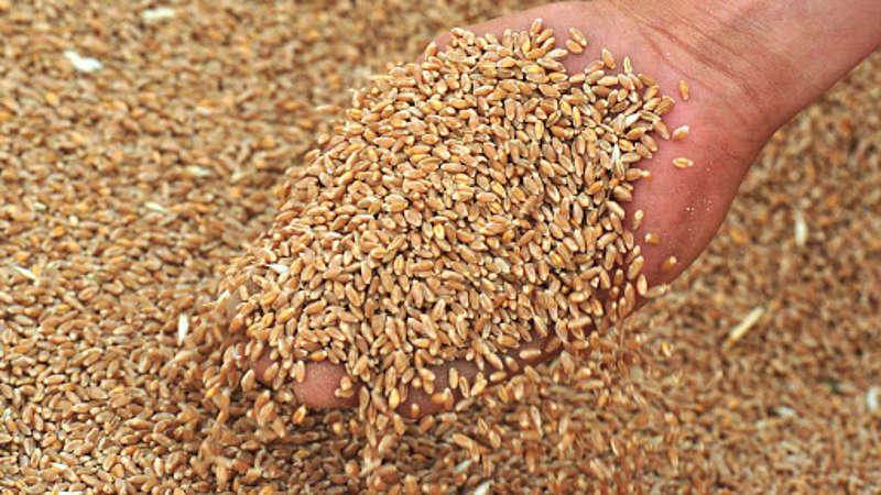 Судитимуть вінничанина, який «кинув» фермерів на «продаж» зерна на 1 млн 300 тис. грн