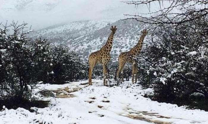 В Африці – рекордні морози і випав сніг! Температура до мінус 10-ти. А у нас спека