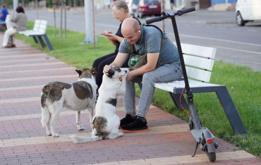 У Вінниці ухвалили нову міську програму регулювання чисельності тварин гуманними методами
