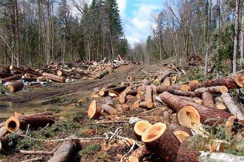 Вінниччина встановила рекорд з незаконної вирубки лісу