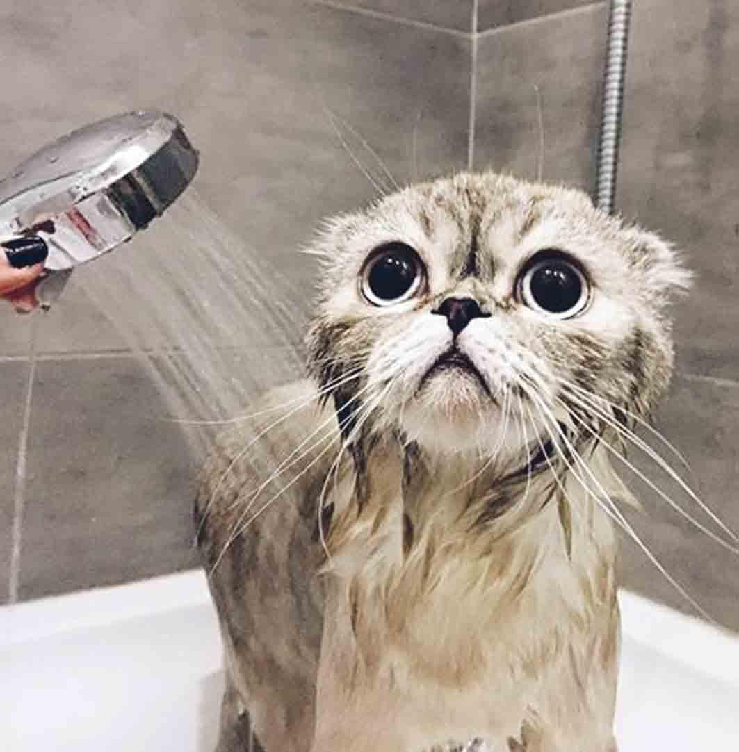 Кіт Кокос має в Інстаграмі 11 000 підписників