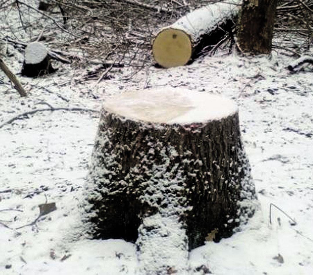 На Вінниччині крадуть ліс