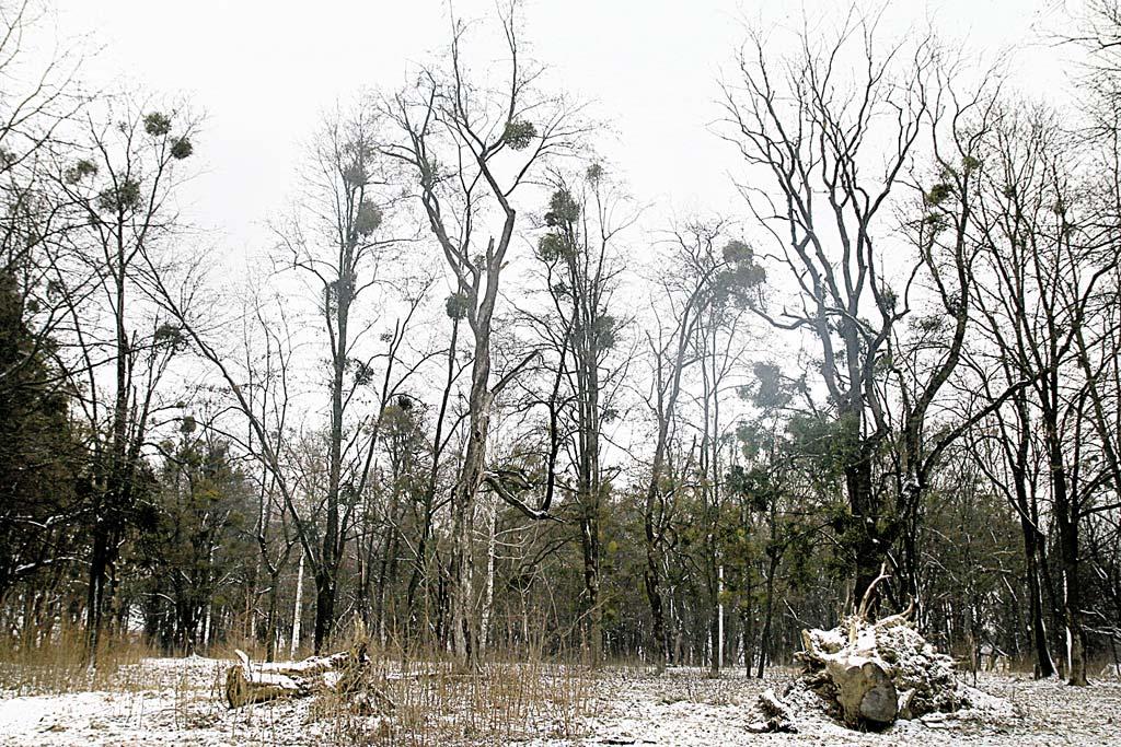 П'ятничанський парк «Красуня» занепадає сто років