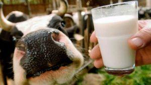 Чому молоко приймають за копійки і постійно щось «мутять»?