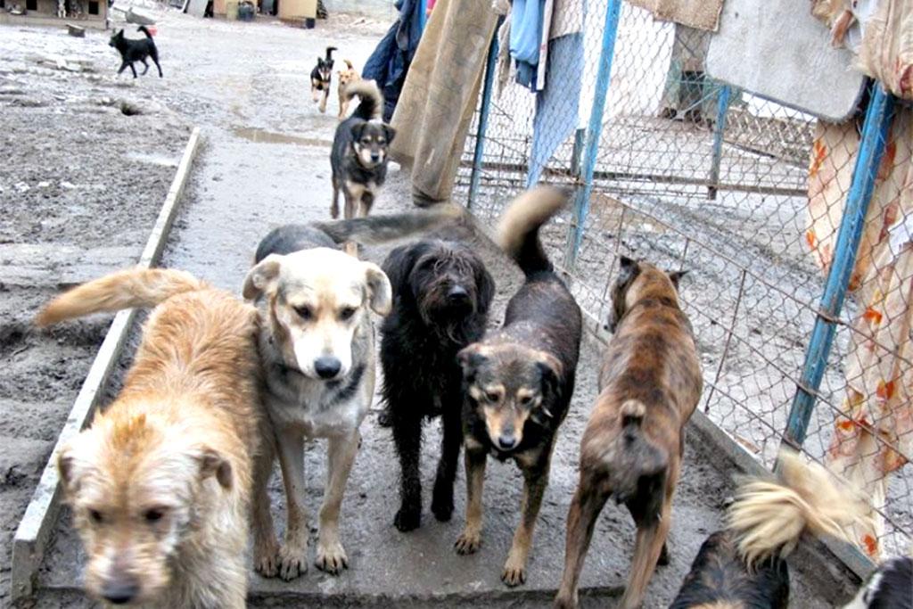 Давайте разом рятувати безпритульних собак