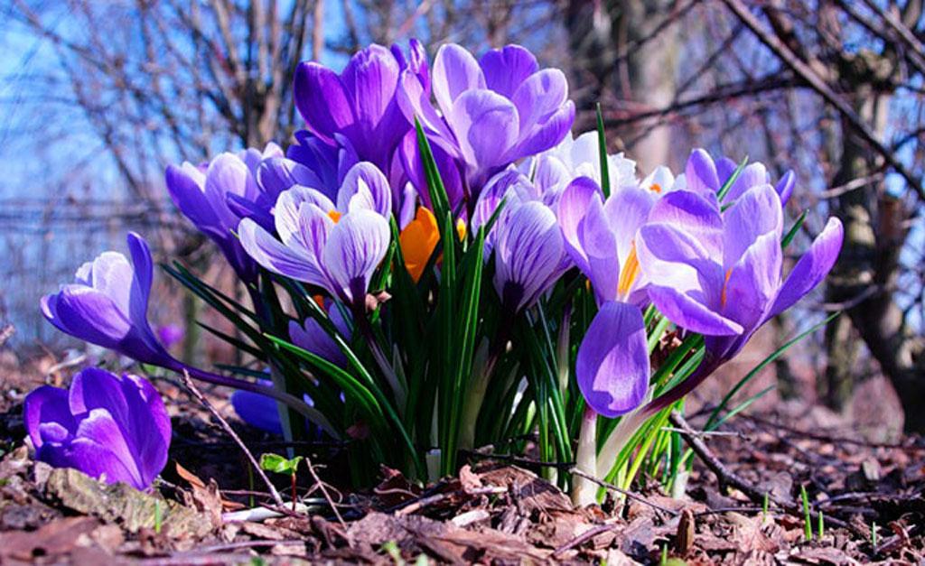 А за вікном уже весна!!!