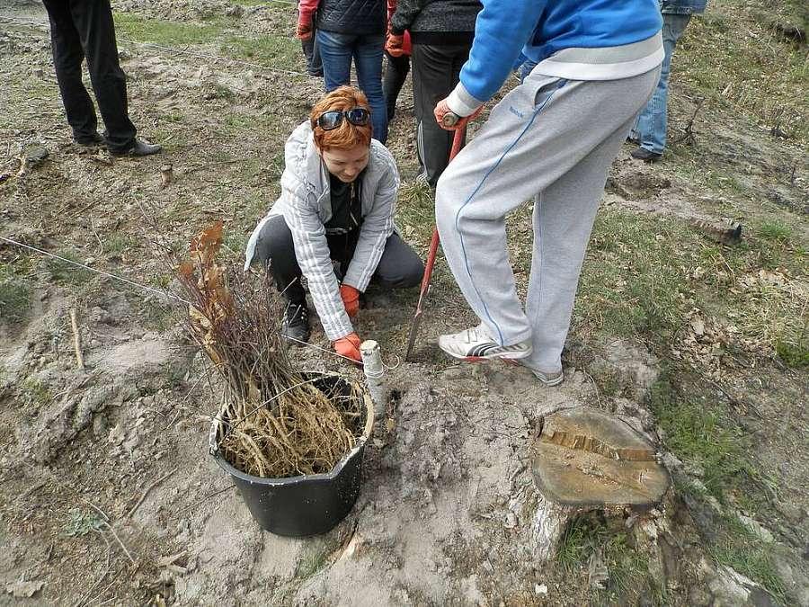 Вінницькі казначеї висадили більше 22 тисяч дерев неподалік від місця вибухів снарядів