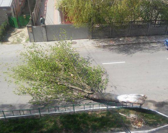 Шквальний вітер валив дерева на Вінниччині