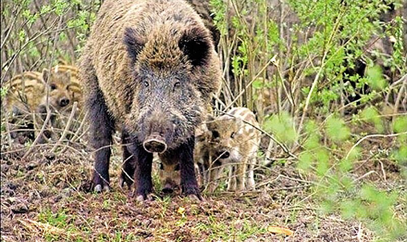Сезон тиші та спокою панує з 1 квітня до 15 червня у лісах Вінниччини