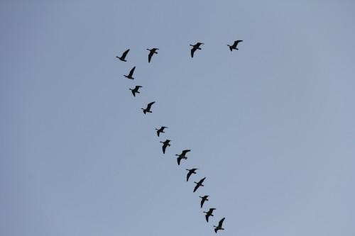 Летять журавлі