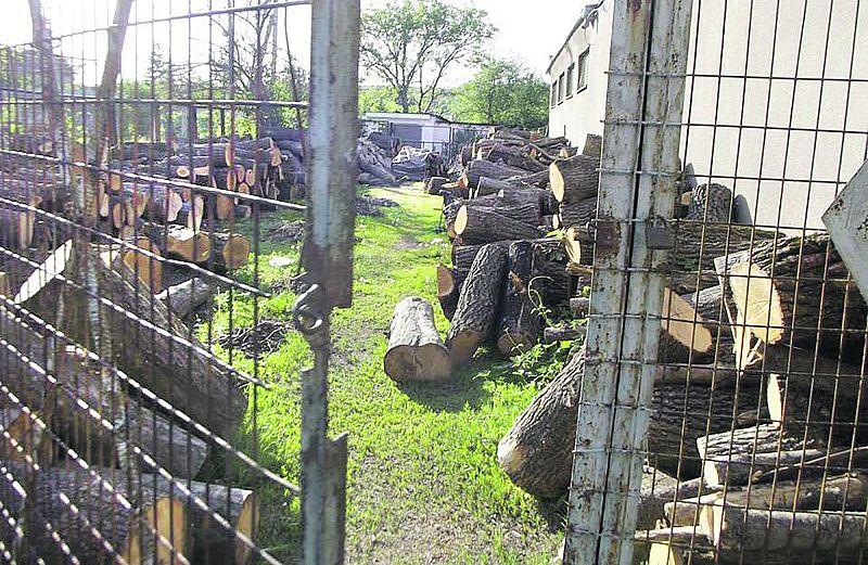 Дубова справа в Ямполі: Начальство кришує незаконну вирубку?