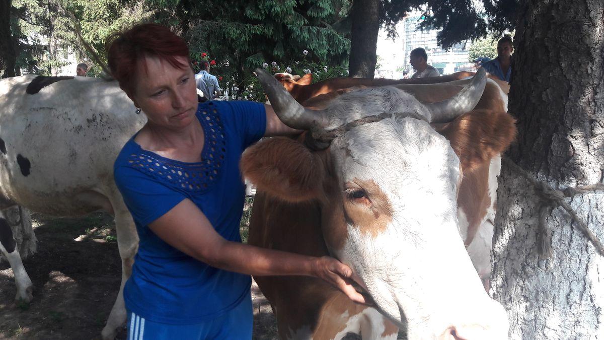 Чим закінчився акційний «випас корів» із Михайлівки під Держгеокадастром у Вінниці?