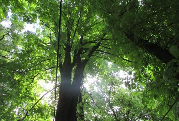 Козятинці піднялися проти вирубки 32 дерев у парку, бо нічим дихати у промисловому містечку