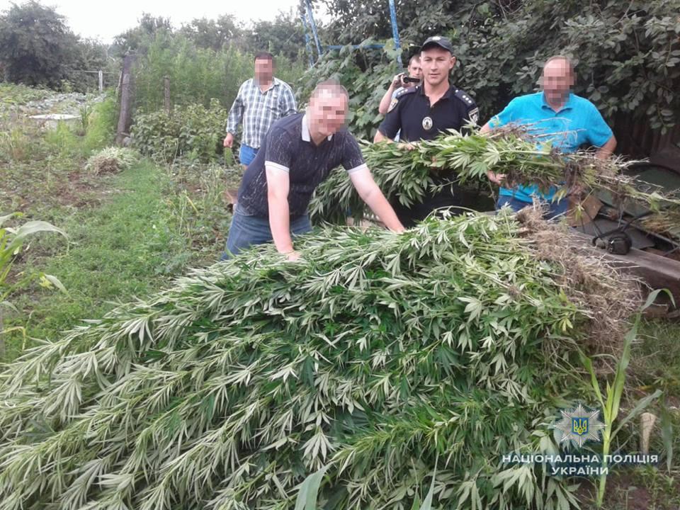 Багатий урожай конопель «зібрала» поліція в Тульчинському районі