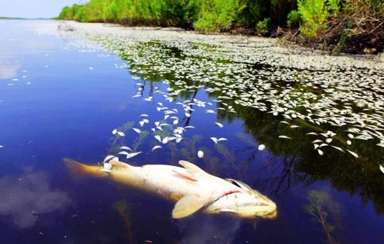 Річка Мурашка і Шаргород стали зоною екологічного лиха