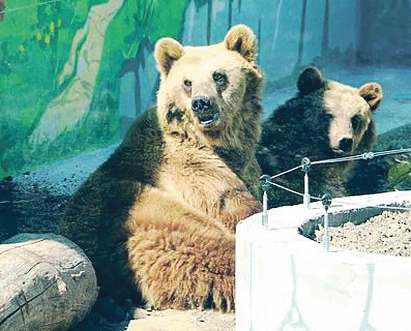 Шестеро ведмедів приїхали до Вінницького зоопарку